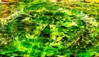 http://www.x04x.com/files/gimgs/th-53_x04x_2014_Art_Trashtonic_Collage_rainysunday_1600.jpg